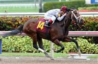 Khozan, debut winner in a maiden special weight at Gulfstream