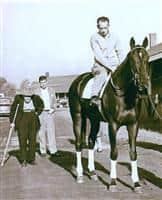 Bold Ruler Horse