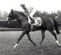 Northern Dancer Horse